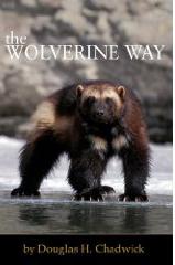 Wolverine Way